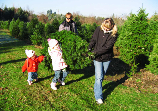 Top 5 Cut-Your-Own Christmas Tree Farms Around The Charlotte ...