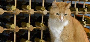 cats paw winery