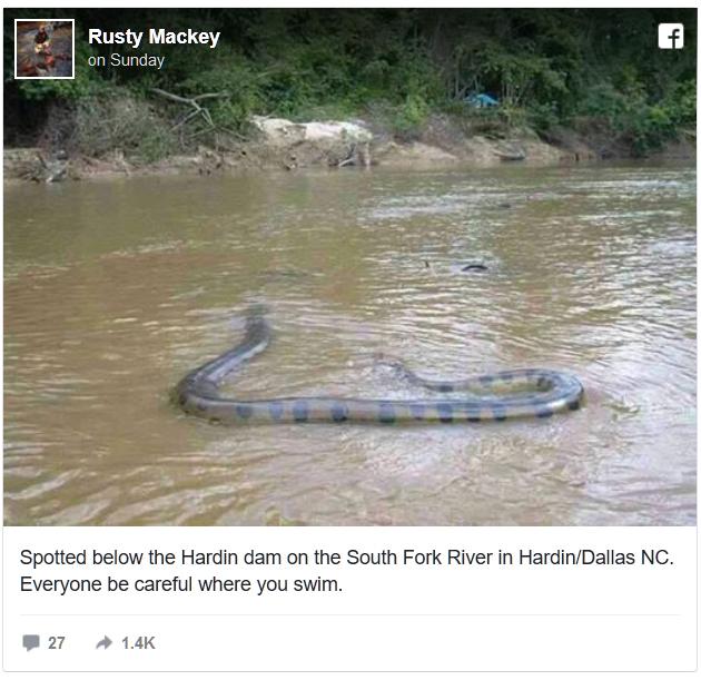 snake hoax