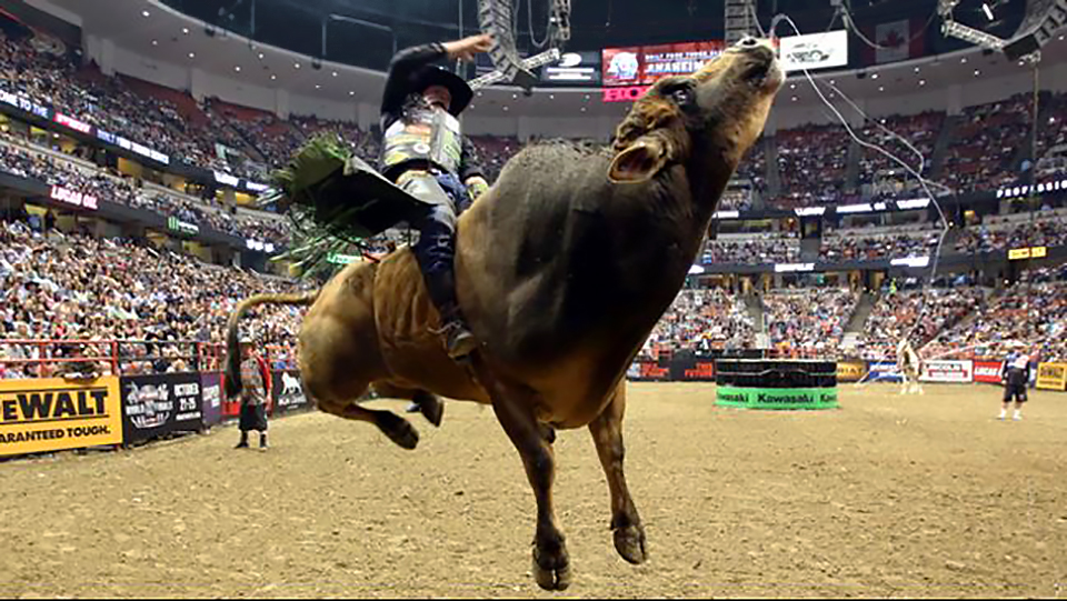 Professional Bull Riding Is Coming To Charlotte