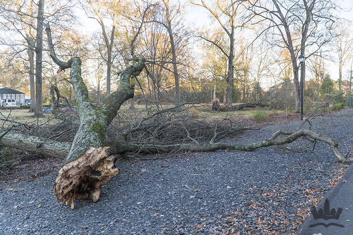 tree-branch-down-charlotte-tornado-small