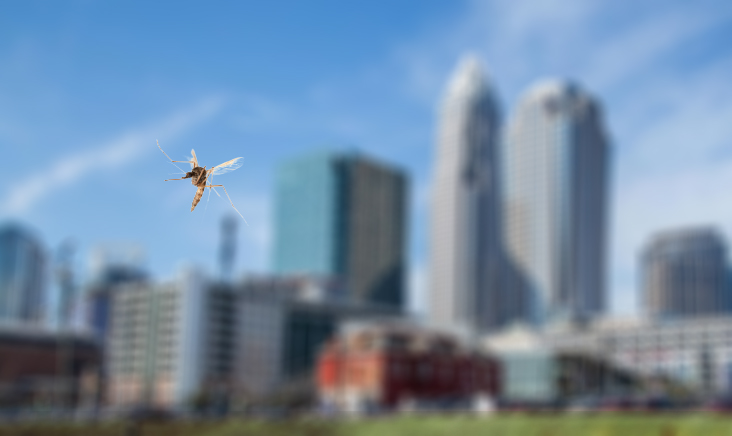 charlotte-mosquito-city
