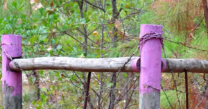 purple-fence-paint-no-tresspassing-in-north-carolina