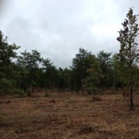 Acreage for sale. 31+ acres No zoning. Residential or Commercial